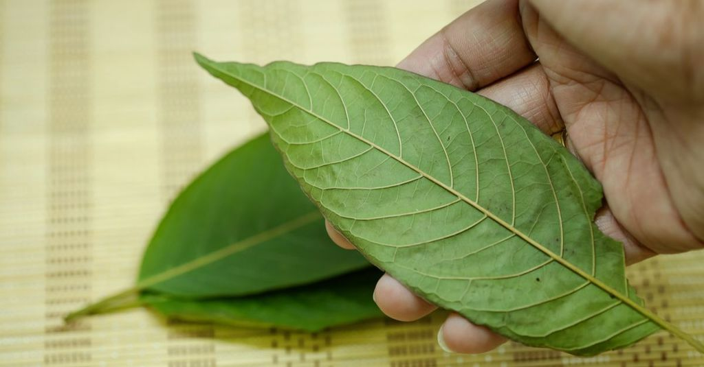 Here's Where You Can Buy High Quality Kratom in 2018
