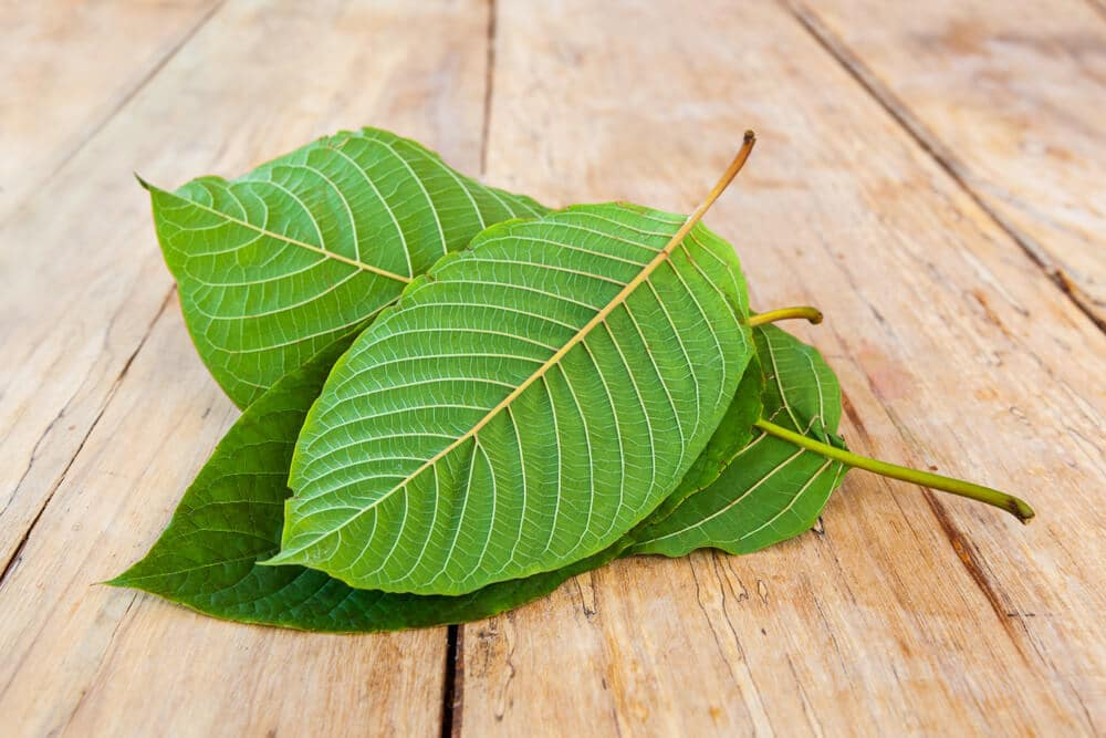 Where to Buy Kratom Online: 5 Quality Kratom Shops (2019)