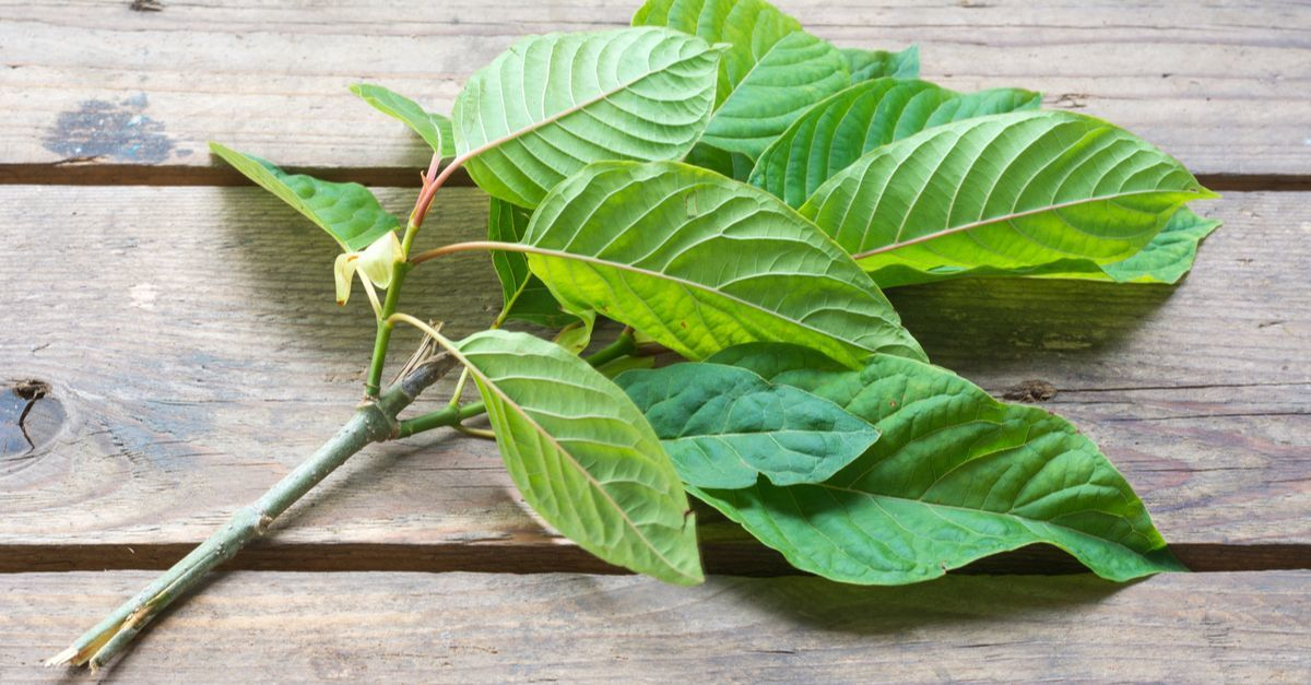 Why Kratom Tea Might Be the Next Big Thing (How to Make It Correctly)