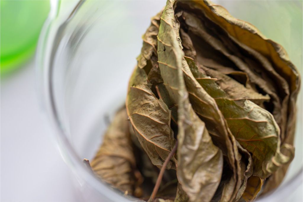 Qutting Kratom Cold Turkey? No, Here's How to Do It Painlessly